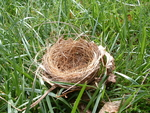 Birds Nest - Side