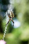 Spiders-6518